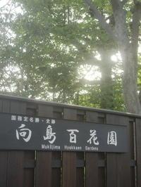 東京下町の植物園とは向島百花園 - 活花生活(2)