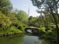 スカイツリーが映る植物園 - 活花生活(2)