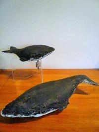 松本良太さんのクジラ。 - ギャラリー曜燿