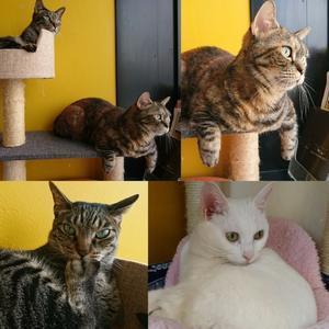 タワーの住猫「うり坊&いちごさん&おもちさん」 - わたしの写真箱 ..:*:・'°☆