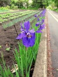 雨上がりのお散歩~南軽井沢パトロール♪ - ぴきょログ~軽井沢でぐーたら生活~