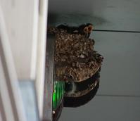 今日の鳥さん 170525 - 万願寺通信