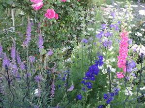 新しい庭、2度目の初夏はバラ「パレード」と草花が素敵にコラボ - 小さな棲家