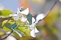 庭の花達は元気 - 玉家の生存報告