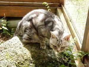 花組、遠征 - ご機嫌元氣猫の森公式ブログ