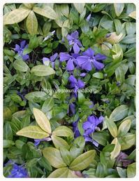 【雑記】紫の花1 【英】例文 【英5トレ言葉】最後… - 【まんが&フォト】 ほかの国のコトバ ― 8言語つまみぐい
