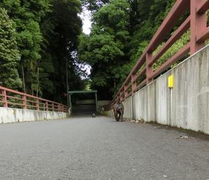 5月27日7.58km - ちんたかたった~♪   feat.じゅっ