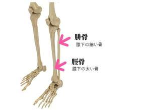 脛骨と腓骨を理解する - らくらく太極拳