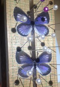 近所のウラゴマダラシジミ - 蝶と