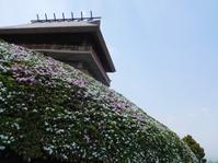ツツジの咲く市民の森へ - Meenaの日記