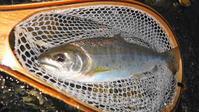イブニング2 - 今日のお魚。