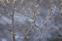 essence - Aruku