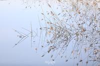 シンメトリー - Aruku