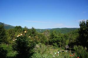 ひなげしが咲き始めました - フィレンツェ田舎生活便り2