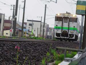 5月27日今日の写真 - ainosatoブログ02