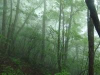 ハイキングツアー - ゲストハウス東京かぐらざか