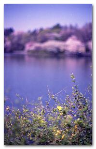 #2191 紫に煙る・・・ - at the port