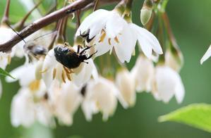 花に潜る - 丹馬のきょうの1枚