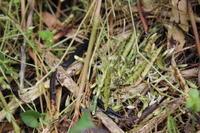 姿見せぬものの痕跡 - 週刊「目指せ自然農で自給自足」
