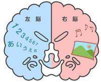 左脳と右脳 - コペル・みなとみらい日和(幼児教室コペル 横浜ランドマークプラザ教室 @ みなとみらい、桜木町)