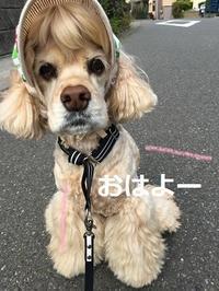 最近のコンビニ(ワンコ係留場所)♪ - ココちゃんの「ぽかぽか日記」