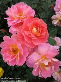バラ園~①ピンクの薔薇 - nanako*sweets-cafe♪