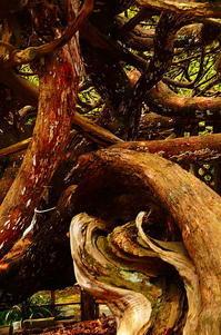 ねじれた木 - 風の香に誘われて 風景のふぉと缶