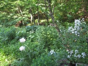 白い花の咲く頃は - 雲居