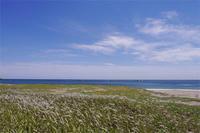 旬の花 チガヤ - Beachcomber's Logbook