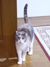 猫のお留守番 マミちゃん編。 - ゆきねこ猫家族