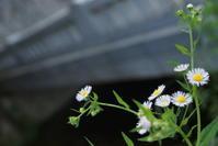 横縦比 3:2 における狐狸庵先生 - 日本写真かるた協会~写真が好きなオッサンのブログ~