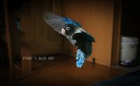 ぶんぶんB.B~♪ (久しぶりに~~) - FUNKY'S BLUE SKY