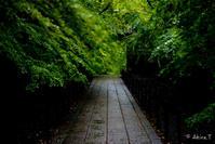 京都の新緑 2017 〜光明寺 2〜 - ◆Akira's Candid Photography