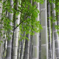 視角50度の都市 - 鯵庵の京都事情