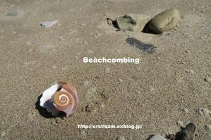 Beach combing - すずめtoめばるtoナマケモノ