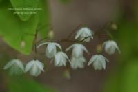 六甲高山植物園 - 静かな時間
