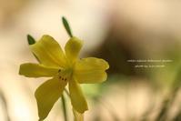 高山植物園の花 - 静かな時間