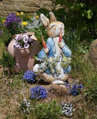 六甲ガーデンテラス・コッテージガーデンに咲く花 - たんぶーらんの戯言