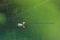 綺麗な水辺で - イチガンの花道