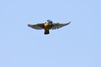 週末の野鳥撮り - ukiuki-sunday