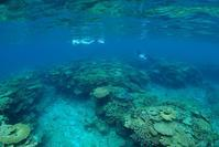 世界の国々から、遊びに来てくれました。奄美大島ダイビング - 奄美大島 ダイビングライフ    ☆アクアダイブコホロ☆