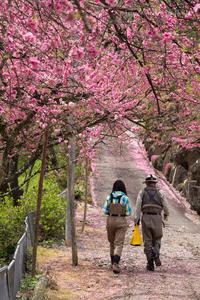 5月の渓流はやっぱり楽しいです‥ - 鈴木寿のブログ  フライフィッシングな毎日