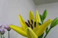 お咲きに - doppler