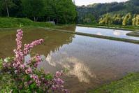 ウツギ咲く頃 - 松之山の四季2