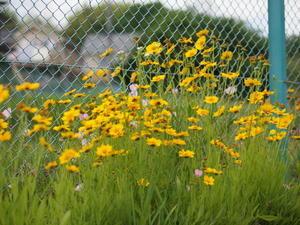 野の花 - エンジェルの画日記・音楽の散歩道