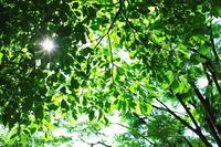 新緑 - day pHoto