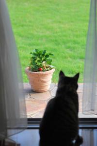 5/26 見張り猫 - 「あなたに似た花。」