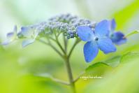 花写 - 長い木の橋