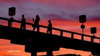 夕焼けの蓬莱橋 - 長い木の橋