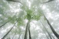 雨の日には森へ - 四季燦燦 癒し系~^^かも風景写真